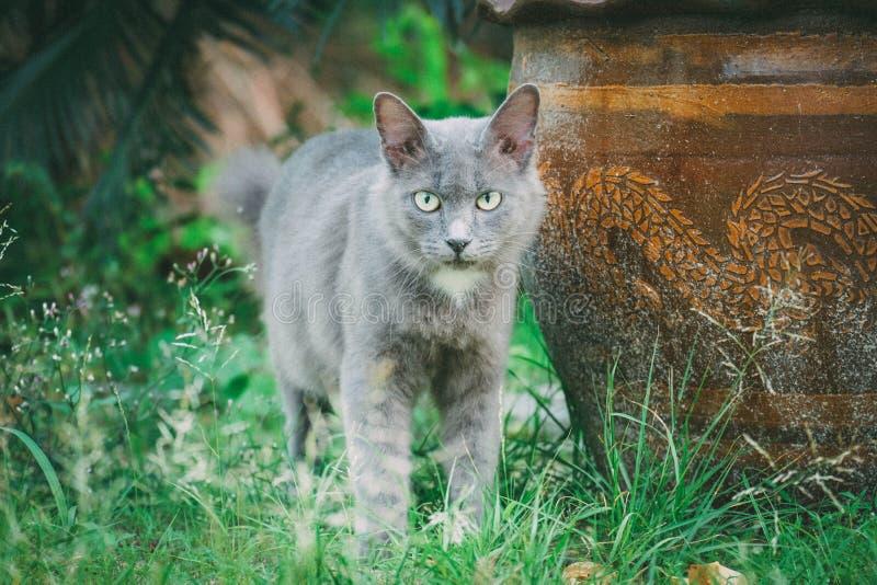 Серый кот стоковое фото rf