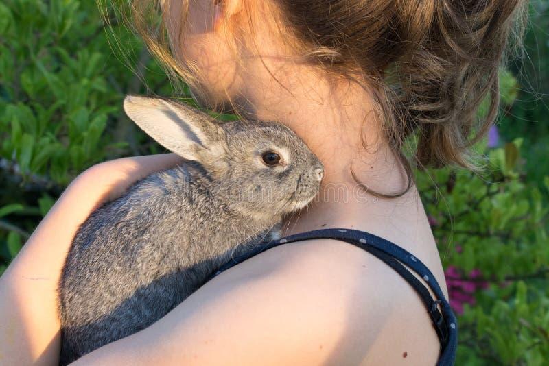Серый кролик стоковое изображение rf