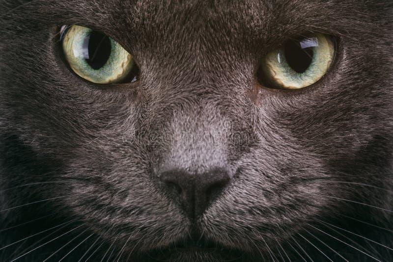 Серый крупный план стороны кота с зелеными глазами стоковые фотографии rf