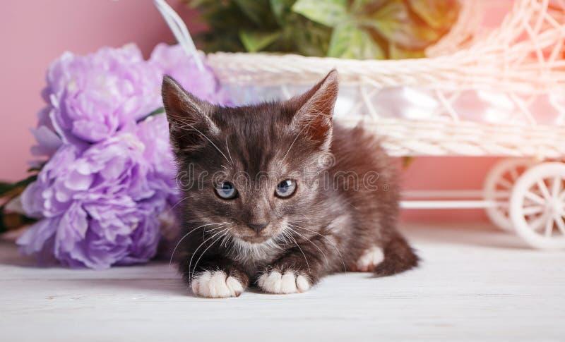 Серый пушистый кот лежит перед оформлением стоковые фото