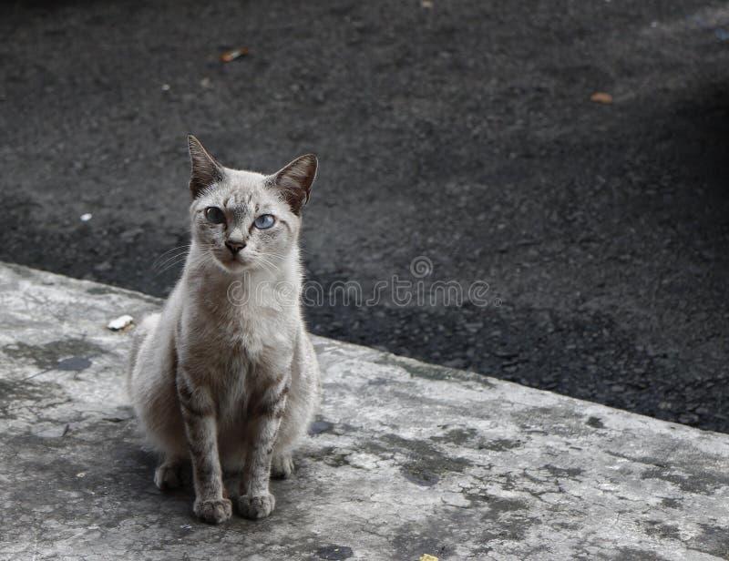 Серый рассеянный кот стоковые изображения rf