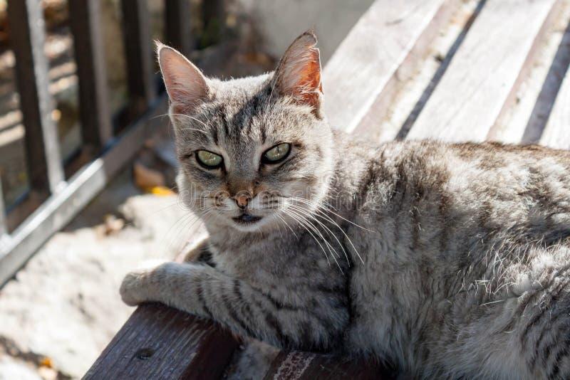 Серый цвет striped случайный кот улицы с ухом фрагментации отдыхая на стенде на улице Получившаяся отказ концепция укрытия котов  стоковое изображение