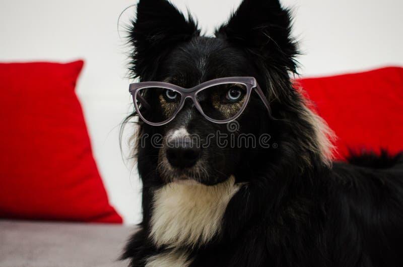 Серьезная собака офиса стоковые изображения rf