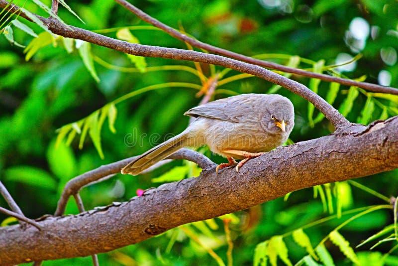 Сердитое bird стоковое фото rf