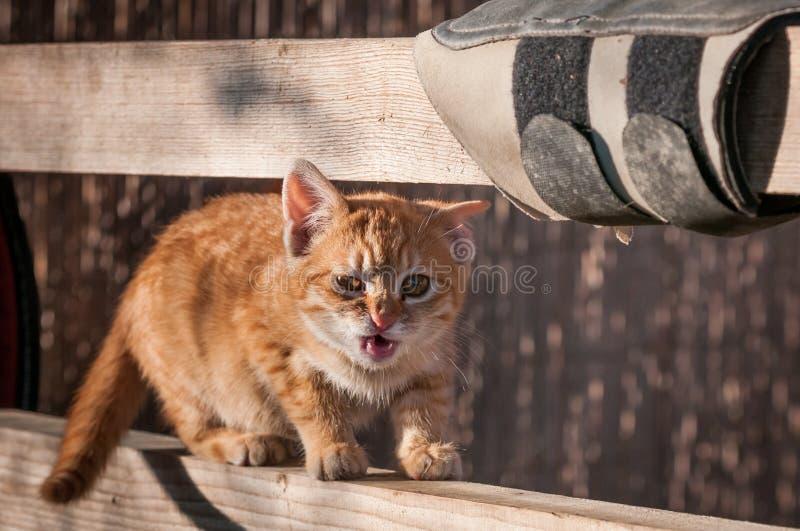 Сердитый котенок стоковое изображение rf