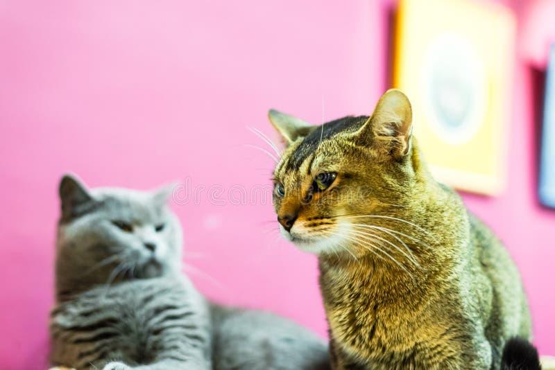 2 сердитых кота стоковые изображения rf
