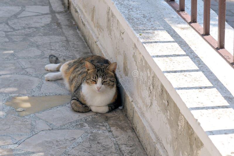 Сер-красн-белый кот лежа на каменной мостоваой стоковое изображение rf