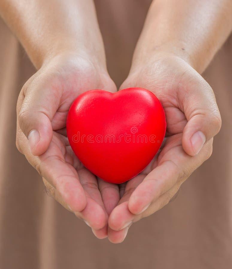Сердце в руках для дает с влюбленностью стоковые изображения