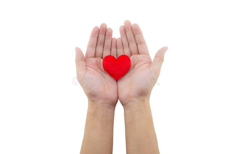 Сердце в руке на белой предпосылке стоковое изображение