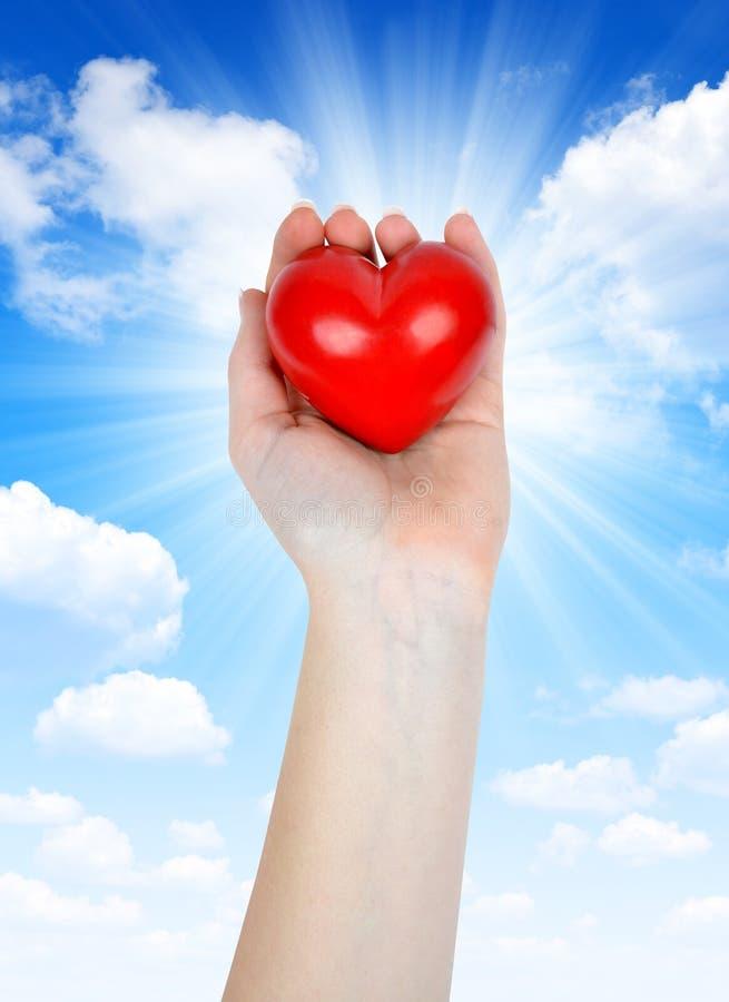 Сердце в руке стоковые изображения