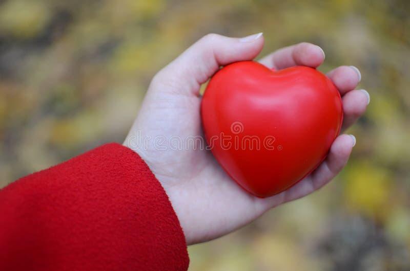 Сердце в руке стоковое изображение