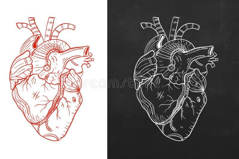 Сердце, естественное сердце, сердце эскиза иллюстрация вектора