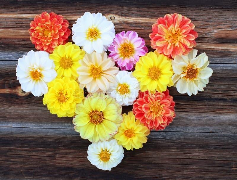 Сердце от цветков георгинов на деревянной предпосылке стоковое фото rf