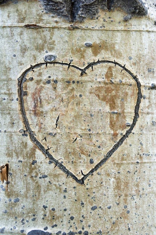 Сердце расшивы Aspen стоковые изображения rf