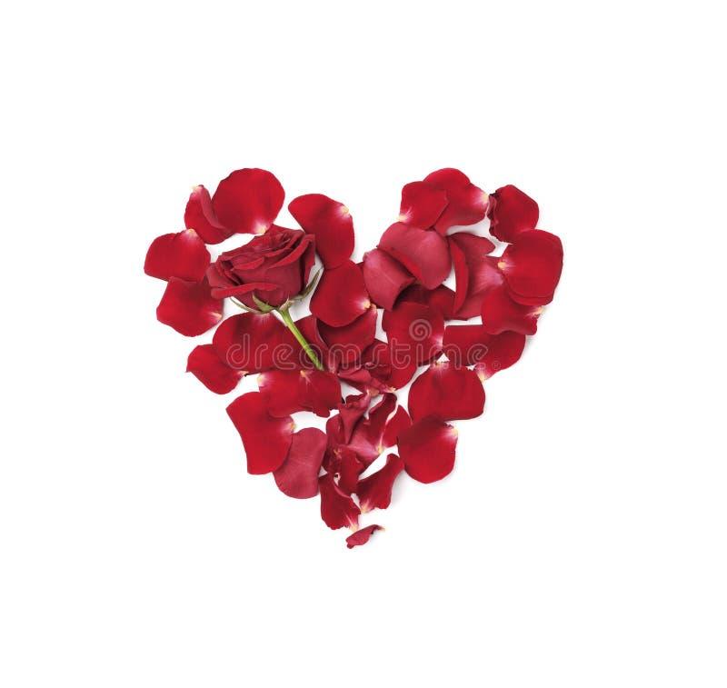 Сердце сделанное от лепестков роз на белом взгляд сверху предпосылки Плоское положение стоковое изображение rf