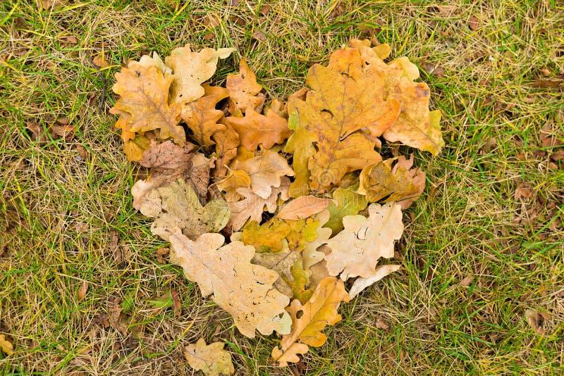 Сердце упаденных листьев стоковые изображения rf