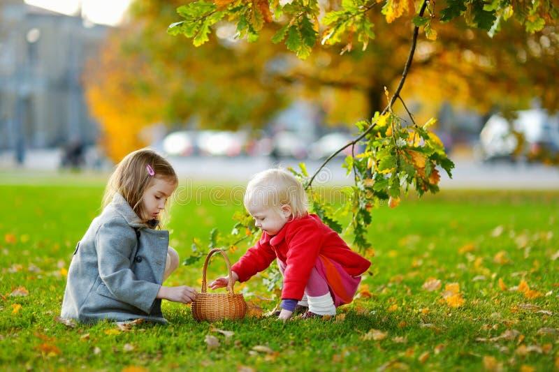 Download Сестры собирая жолуди для производить и играть Стоковое Изображение - изображение насчитывающей яркое, девушка: 41660651