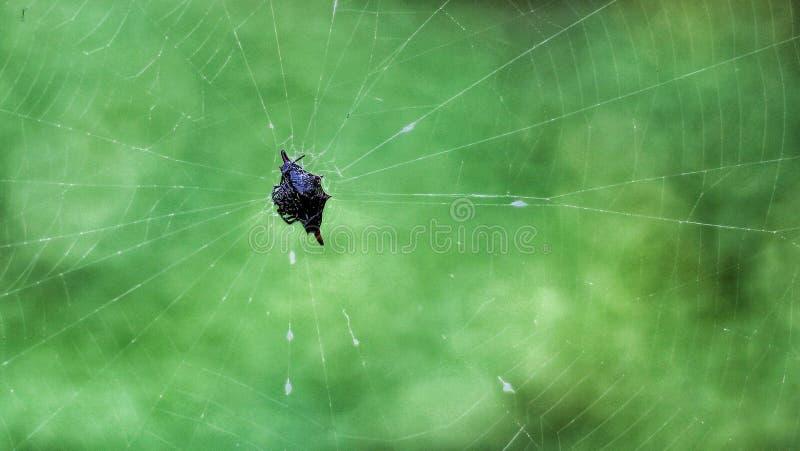 Сети паука ловушки Для выживания стоковые изображения