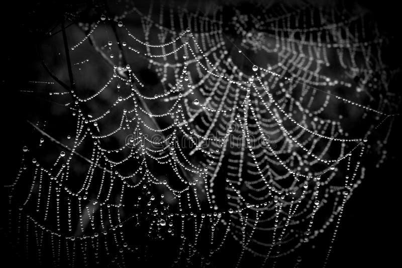 Сети паука с падениями росы стоковое изображение rf