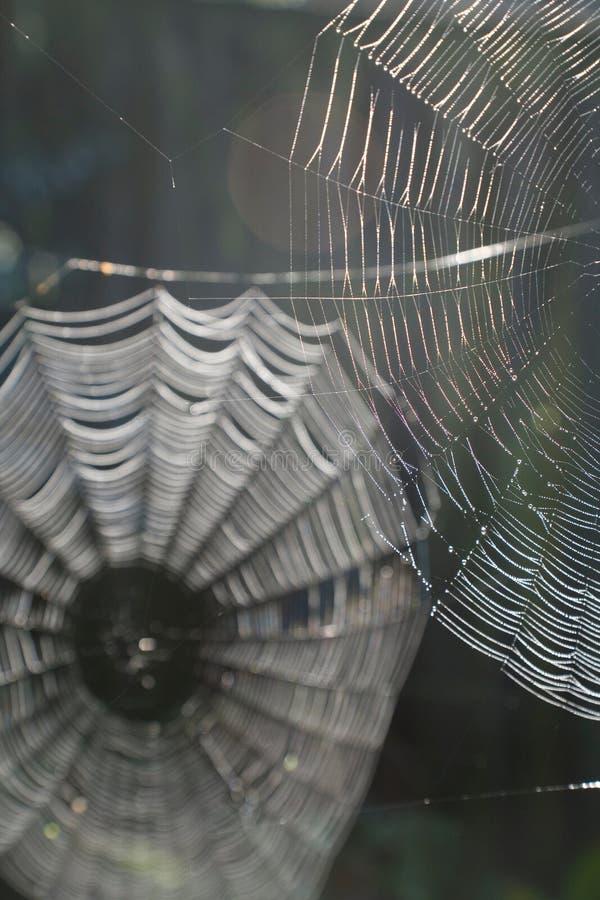 сети паука стоковое фото rf
