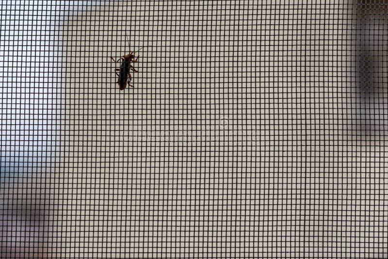 Сетка от комаров с насекомым стоковые фотографии rf