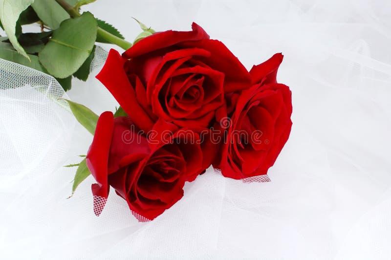 сетчатые красные розы 3 венчания белого стоковая фотография rf