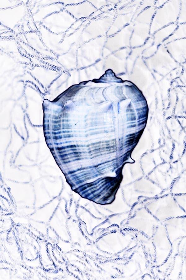 сетчатый Seashell Стоковое Изображение RF