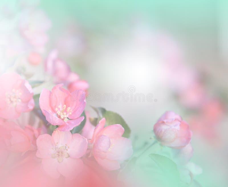 сеть весны природы коллектора цветения знамени Абстрактное фото макроса художническая предпосылка Дизайн фантазии Цветастые обои стоковые изображения