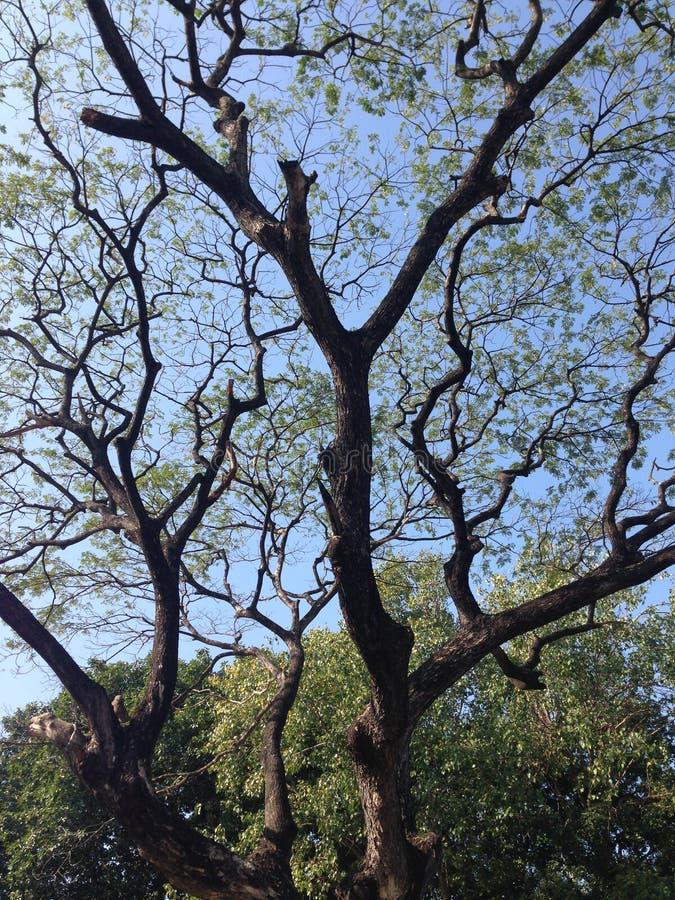 Сеть дерева стоковое изображение