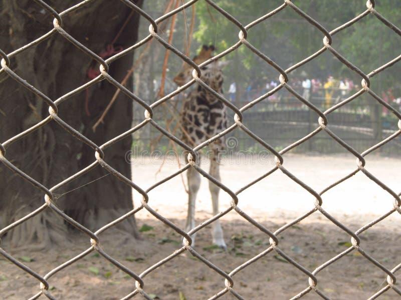Сеть зоопарка стоковое фото rf