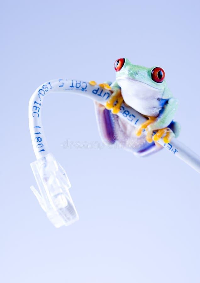 сеть лягушки стоковые фотографии rf
