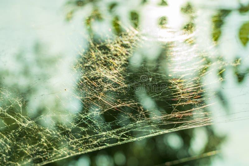 Сеть паука в солнце против неба стоковые изображения rf