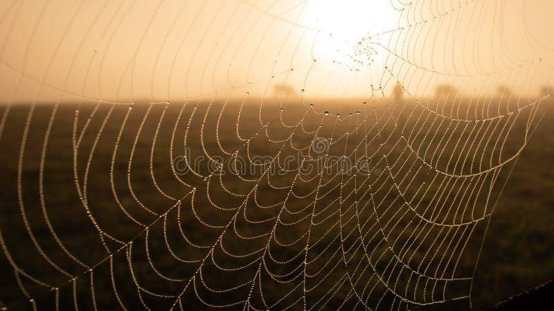 Сеть паука в холодном утре с туманом и росой стоковое изображение