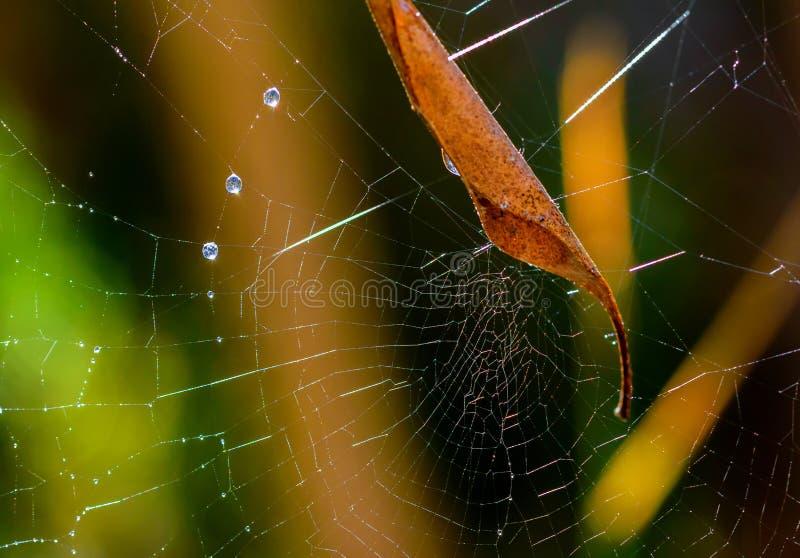 Сеть паука, лист и роса утра стоковые изображения rf