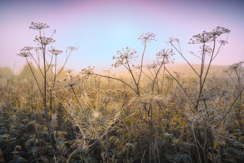 Сеть паука на траве предусматриванной с налет инеей стоковые фото