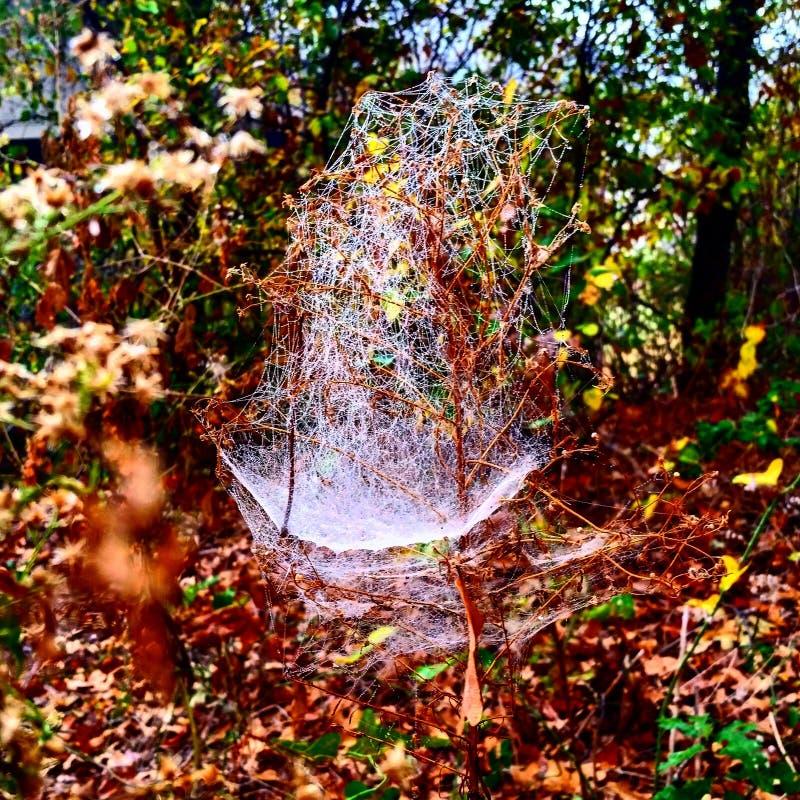 Сеть паука падения стоковое фото rf