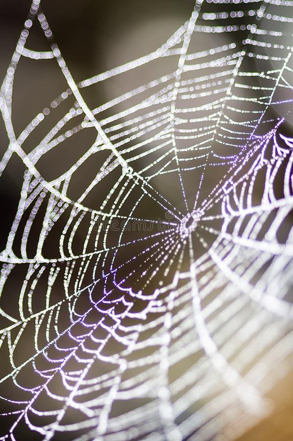 Сеть паука, поглощая сеть паука Фото макроса сети паука стоковое изображение rf