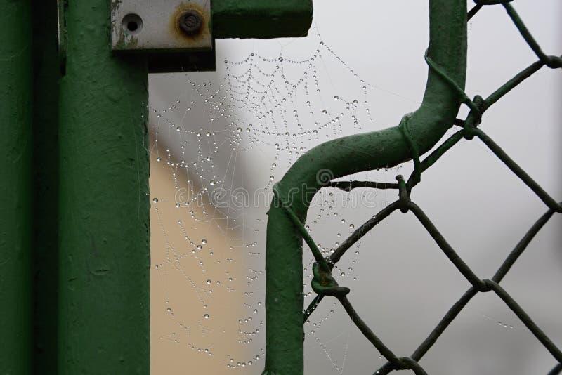 Сеть паука покрытая с водой падает, чехия, Европа стоковое фото rf