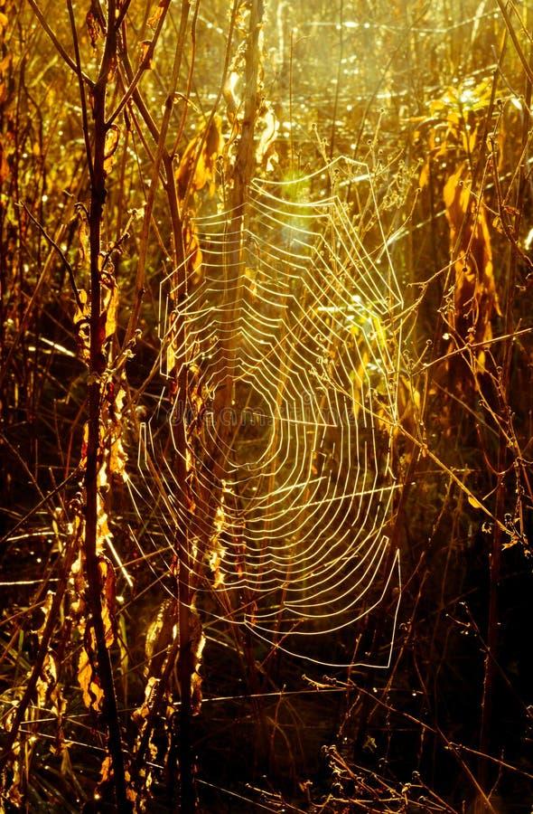 Сеть паука против восхода солнца стоковые изображения rf
