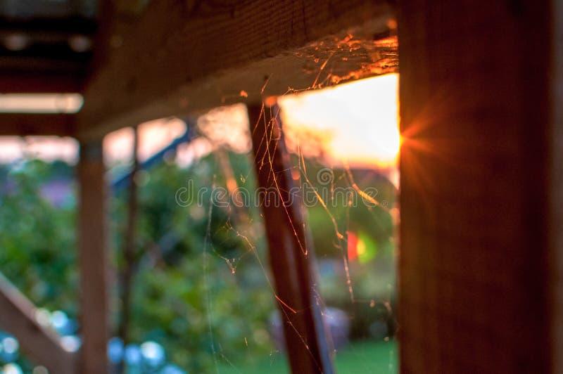 Сеть паука против неба во время захода солнца стоковые фотографии rf