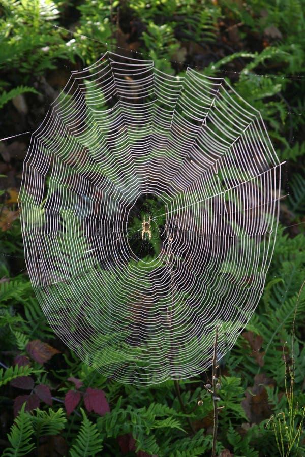 сеть паука пущи стоковая фотография