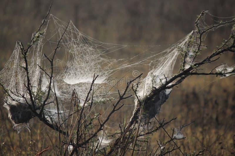 Сеть паука распространенная как волшебство стоковые изображения rf