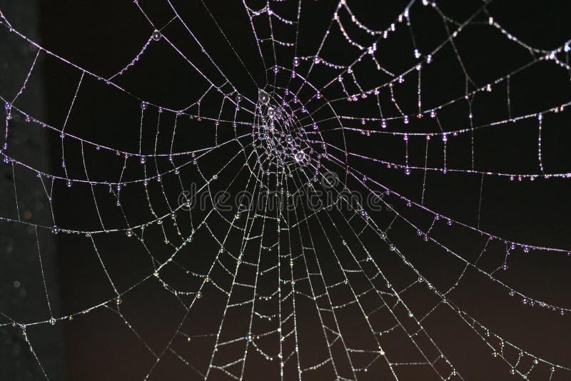 сеть паука росы стоковое фото rf
