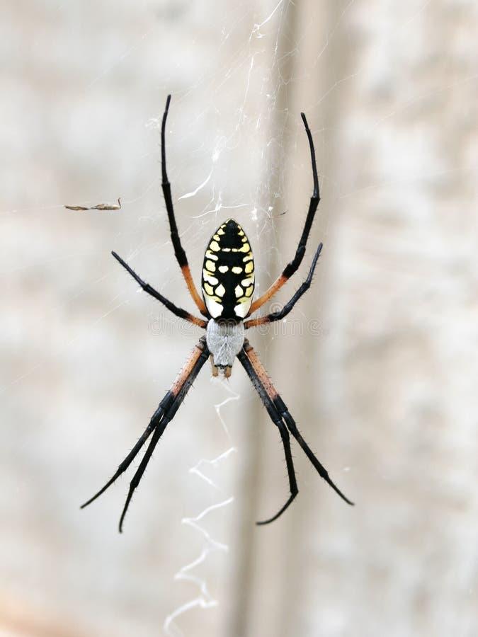 сеть паука сада arachnid стоковое изображение rf