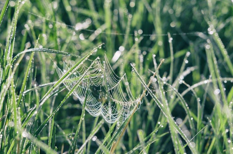 Сеть паука среди лугов бриллиантового зеленого стоковая фотография rf