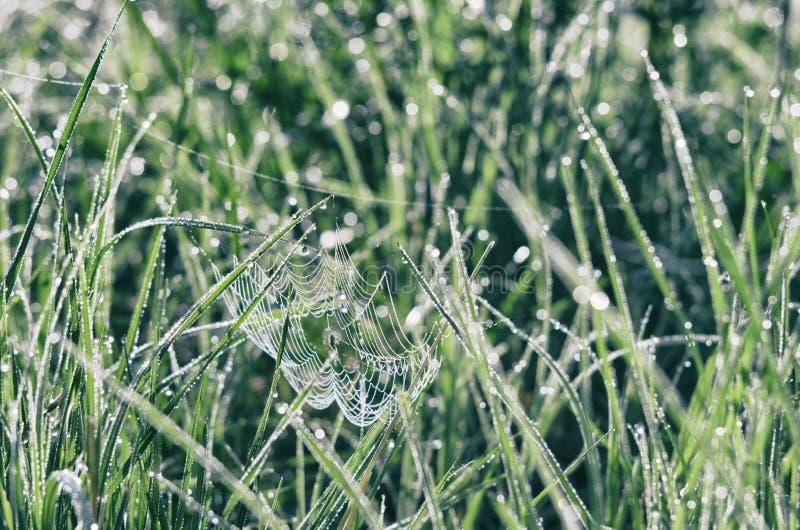 Сеть паука среди лугов бриллиантового зеленого стоковое изображение