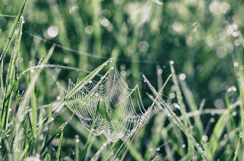 Сеть паука среди лугов бриллиантового зеленого стоковые изображения rf
