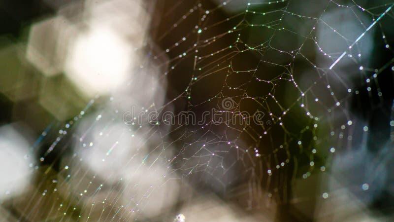 Сеть паука с росой утра стоковые фото