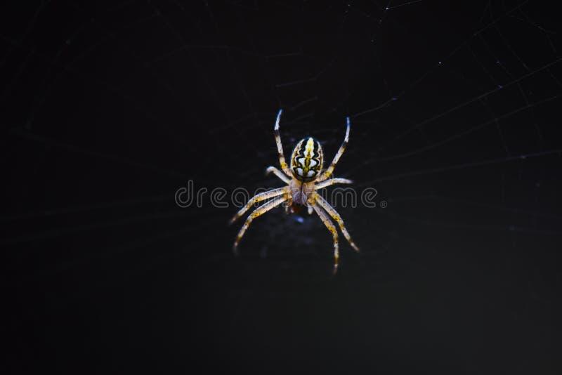 Сеть паука с росой стоковые фото