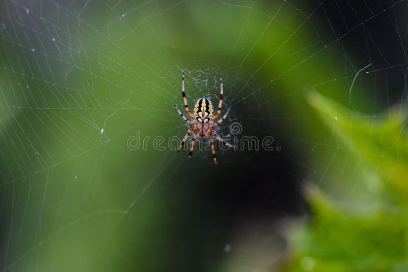 Сеть паука с росой стоковое фото